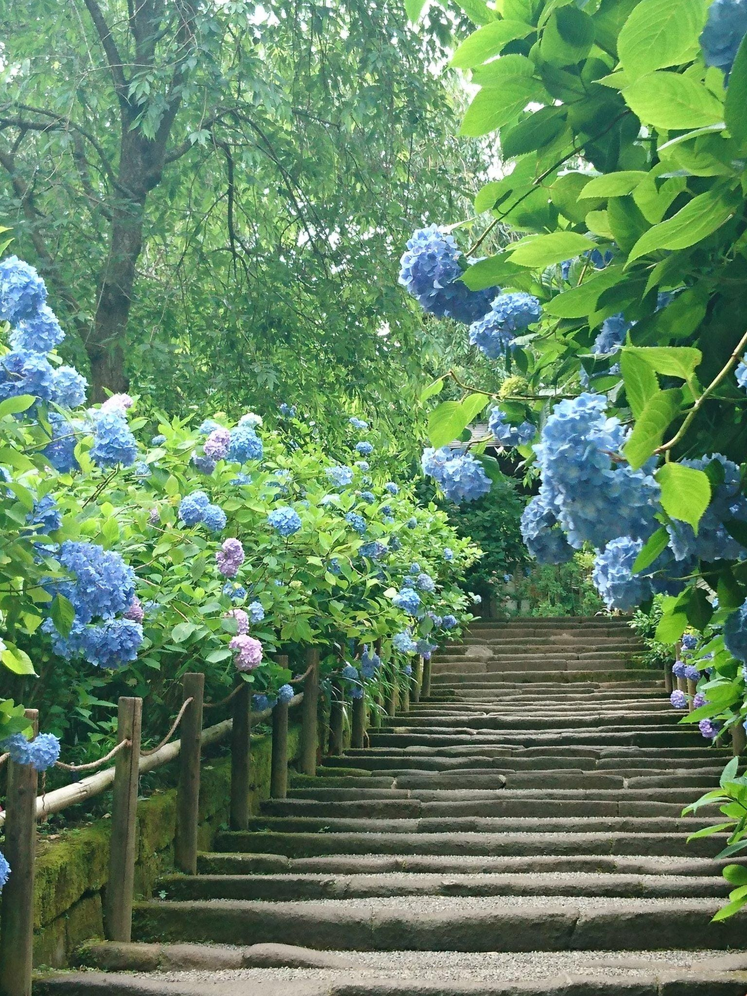 「紫陽花!」05/28(05/28) 15:53 | ジュリアの写メ・風俗動画