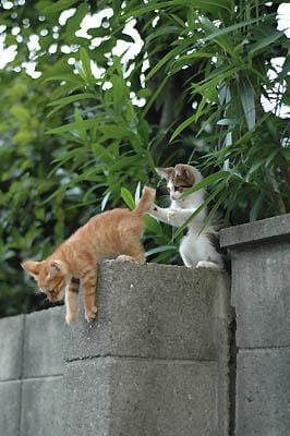 「時間あったら遊びきてくださーい!」06/06(06/06) 23:21 | かえでの写メ・風俗動画