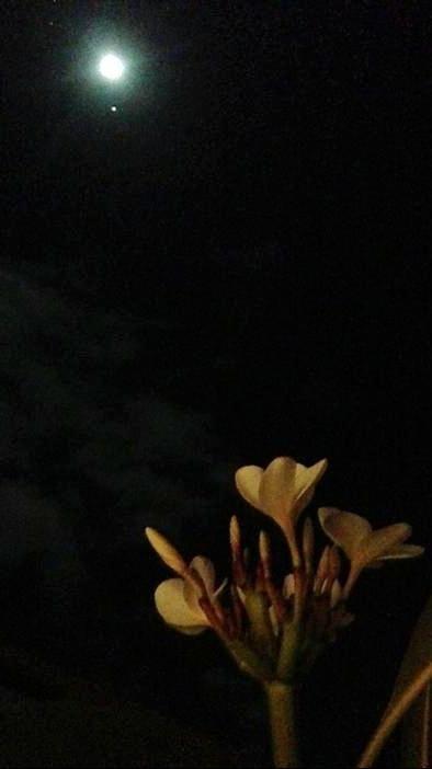 「月とおこわ」06/15(06/15) 23:25 | まみの写メ・風俗動画