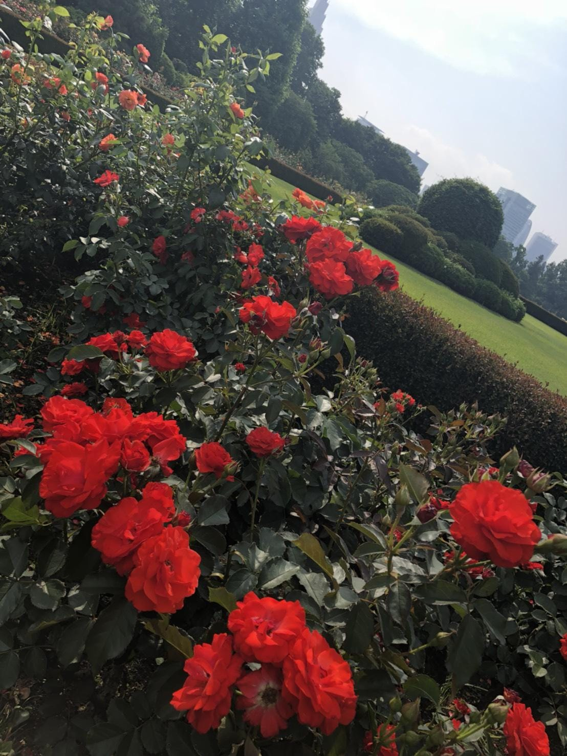 「おはようございます」06/29(06/29) 07:24 | 桐谷(きりたに)の写メ・風俗動画