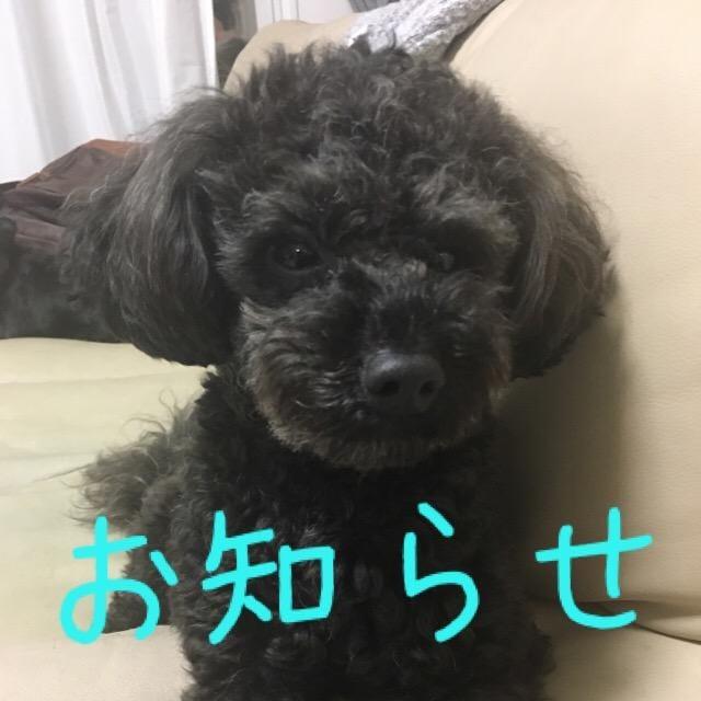 「お知らせ」07/06(07/06) 19:54 | 城川咲の写メ・風俗動画