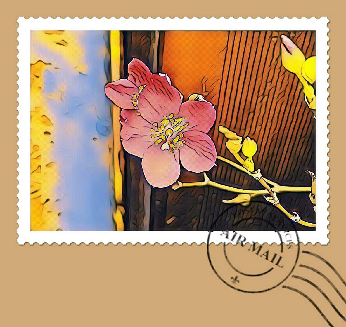 「さわです」07/14(07/14) 08:09 | さわの写メ・風俗動画