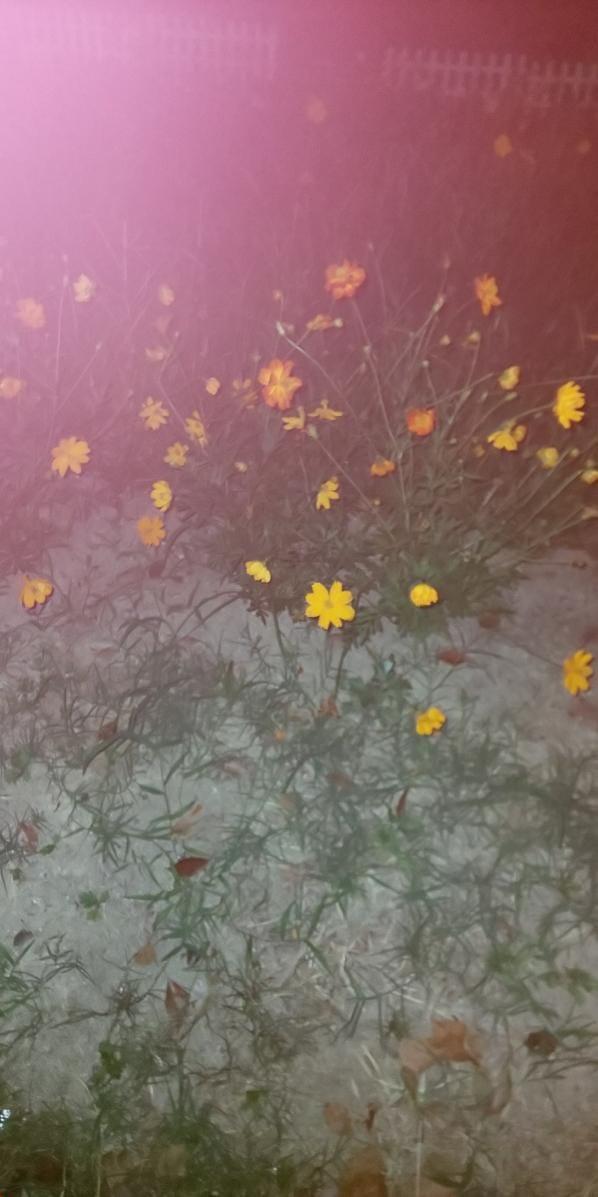 「お花」08/16(08/16) 20:01 | ねねの写メ・風俗動画