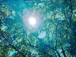 「よき気候ー☀️」08/17(08/17) 12:38   ふみのの写メ・風俗動画