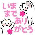 あっちゃん|クラブバレンタイン大阪店