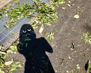 「台風後」09/05(09/05) 14:11 | 相原 ゆかりの写メ・風俗動画