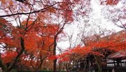 「おひさしぶりです(#^^#)」09/11(09/11) 13:23 | 三木の写メ・風俗動画