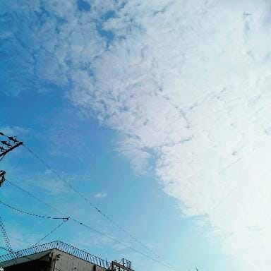 「秋晴れですね(*´ω`*)」09/19(09/19) 08:02   ことみの写メ・風俗動画