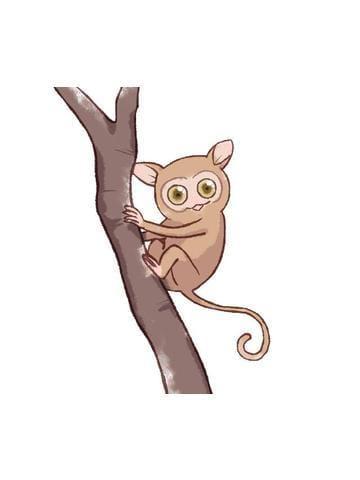 「【アニマル診断】今日の運勢ランキング」09/19(09/19) 19:18 | 樹寿の写メ・風俗動画