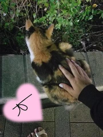 「namaste.」09/23(09/23) 14:30 | このみの写メ・風俗動画