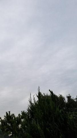 「(o´ω`o)」09/24(09/24) 07:14 | えみ【吸い込まれそうな瞳】の写メ・風俗動画