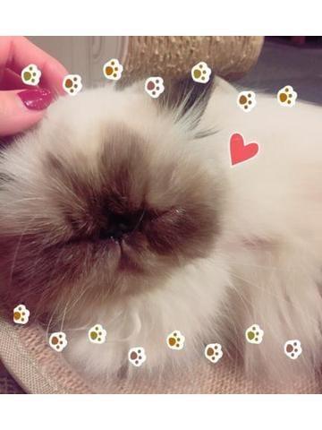 「にゃおにゃお」10/16(10/16) 22:26 | えりかの写メ・風俗動画