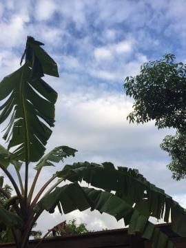 「性欲の秋!?景品豊作♪キノコガチャ」10/17(10/17) 17:35 | ななこさんの写メ・風俗動画
