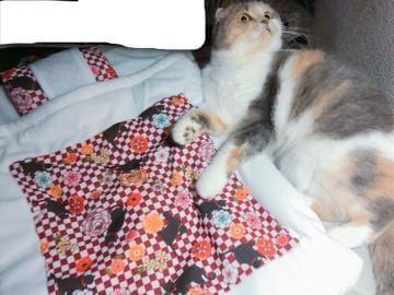 「猫布団」10/21(10/21) 02:55 | ゆうの写メ・風俗動画