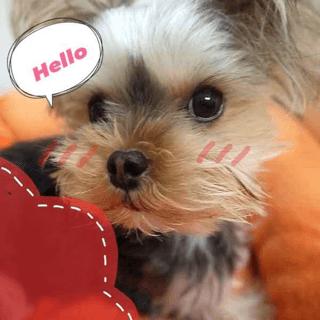 「こんにちは☆」10/27(10/27) 15:41 | 堂本 明日香の写メ・風俗動画