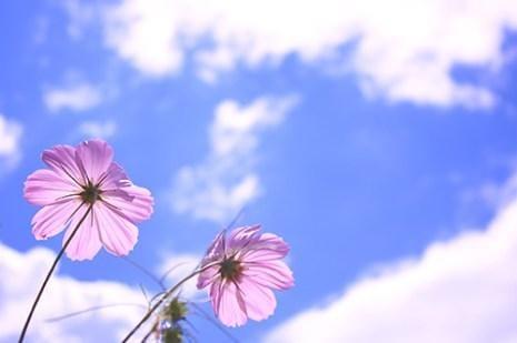 「いい天気です☀️」11/02(11/02) 12:24 | レイカの写メ・風俗動画