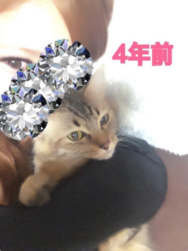 「4年前」11/10(11/10) 19:34 | ゆまの写メ・風俗動画