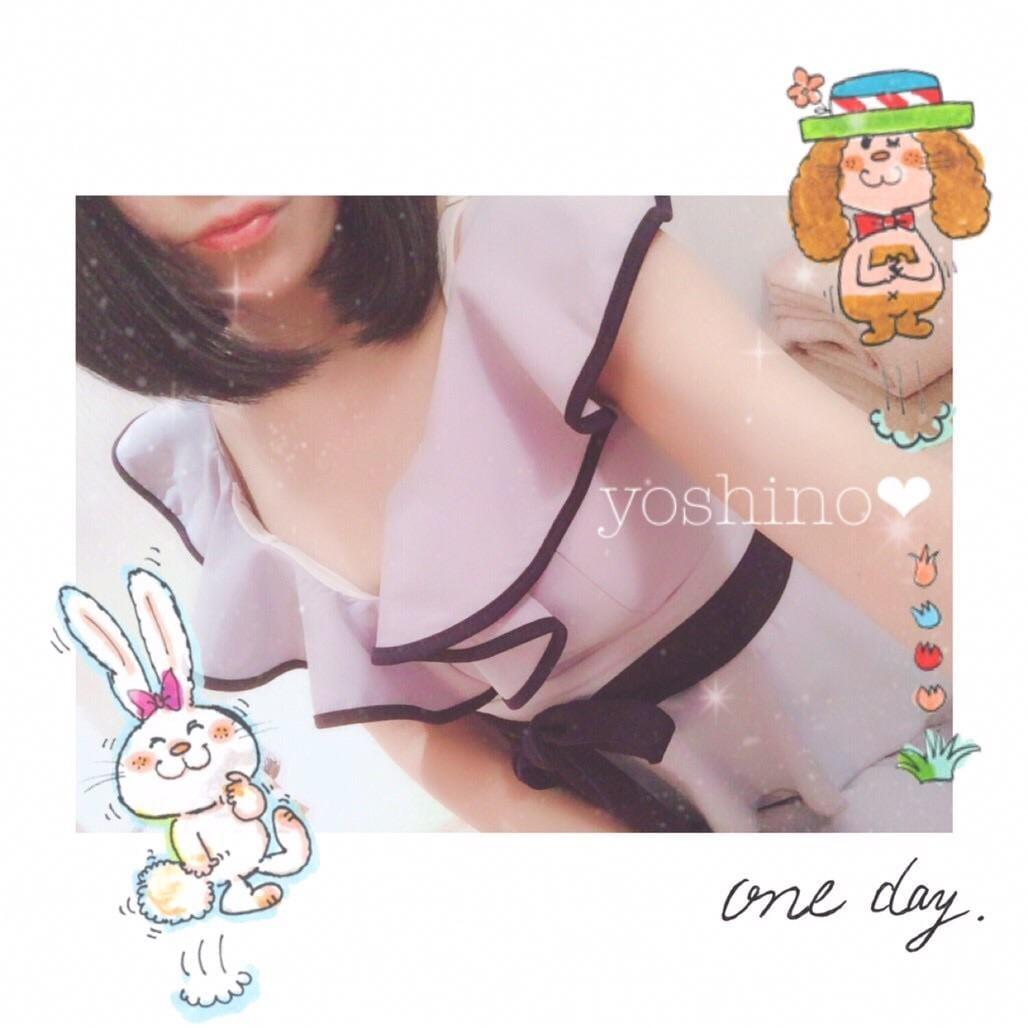 「立ち耳ウサギの日」11/11(11/11) 14:58 | 依田 芳乃の写メ・風俗動画