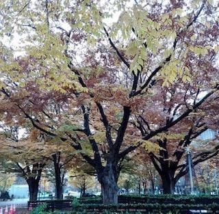 「いちょうの木」11/15(11/15) 07:32 | まきの写メ・風俗動画