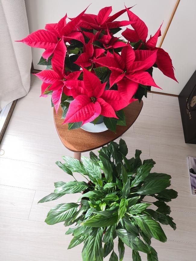 「まりあの癒し2番目。」12/09(12/09) 23:47   まりあの写メ・風俗動画