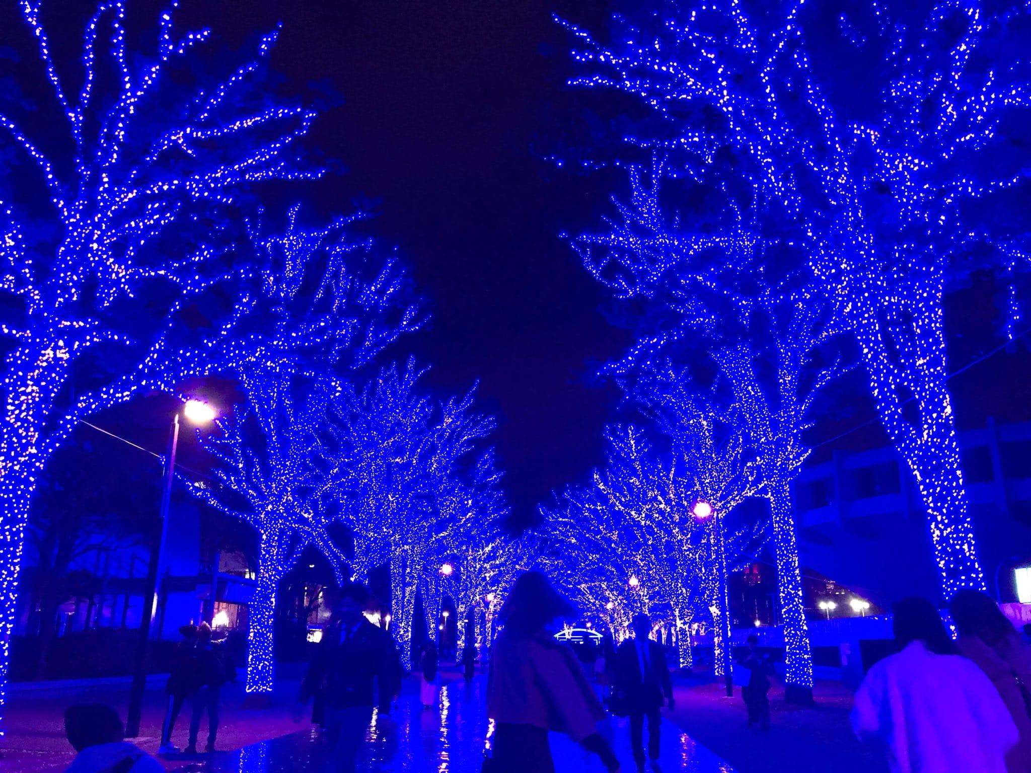 「吉田です」12/12(12/12) 11:39 | 吉田 さきの写メ・風俗動画