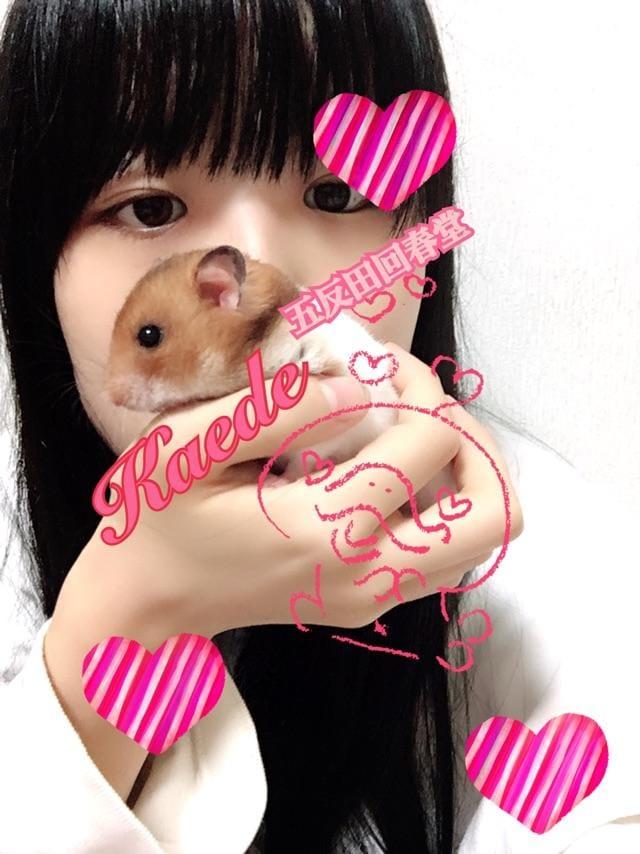 「ロードシス」12/12(12/12) 18:46 | 楓-かえで-の写メ・風俗動画