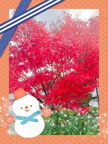 「紅葉」12/13(12/13) 21:26 | かなの写メ・風俗動画