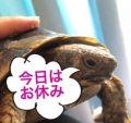 愛菜(あいな)|広島待ち合わせ倶楽部