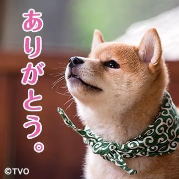 「お早う御座います\(^^)/」12/19(12/19) 09:40 | ゆうの写メ・風俗動画