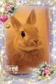 梨々花(R組)|人妻総選挙Mrs48