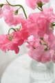 ともみ|大塚 虹いろ回春