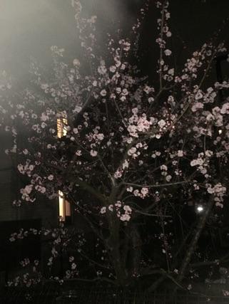「桜」03/27(03/27) 10:13 | あいみ 即尺無料!!の写メ・風俗動画