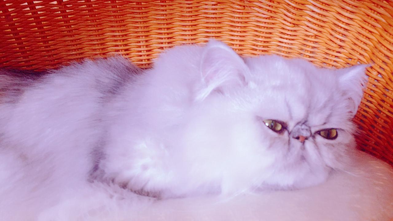 「にゃんこちゃん」03/30(03/30) 20:35   一之瀬栗鼠の写メ・風俗動画