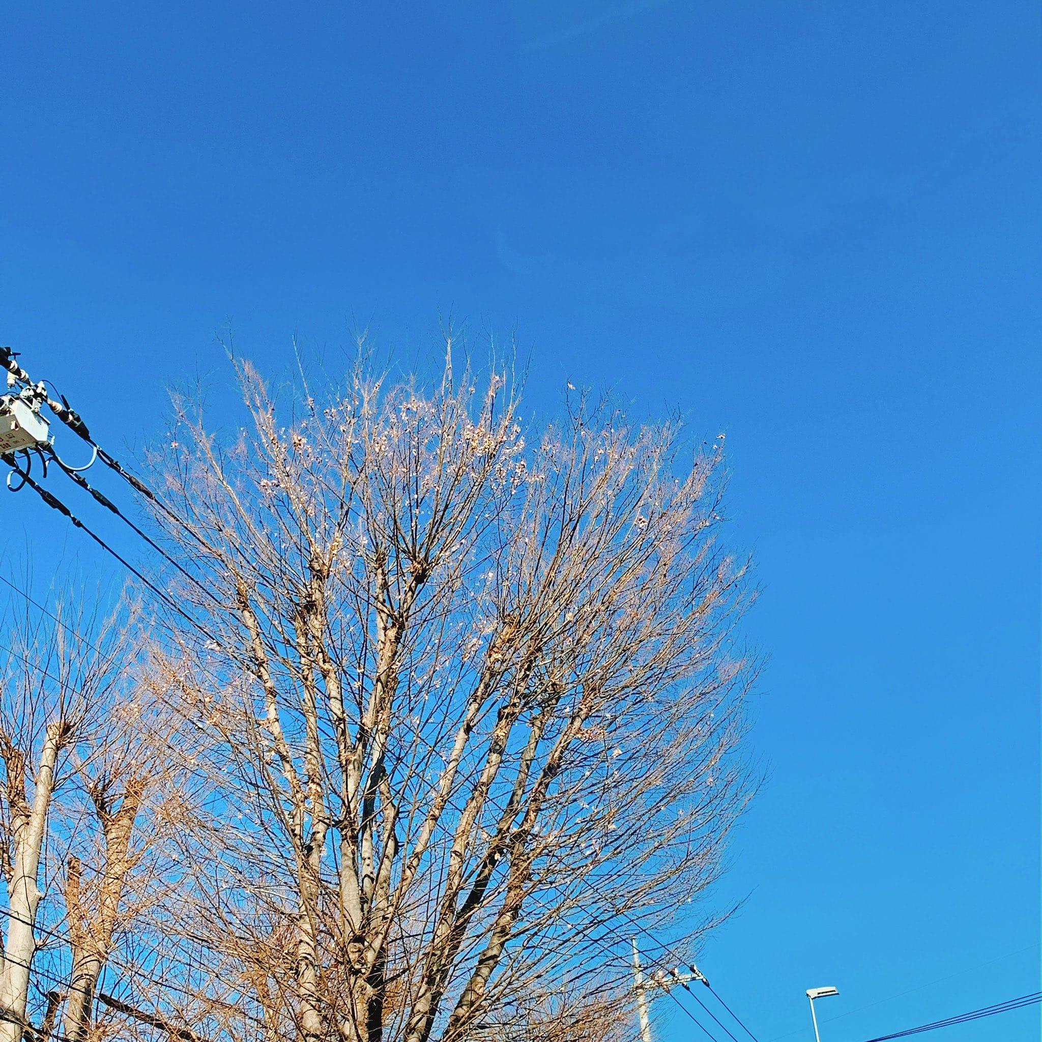 「おはようございます(^-^)」02/18(02/18) 13:04   まきの写メ・風俗動画