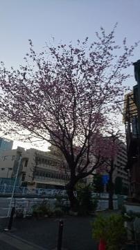 「梅〜???」03/14(03/14) 18:22 | 森田れなの写メ・風俗動画