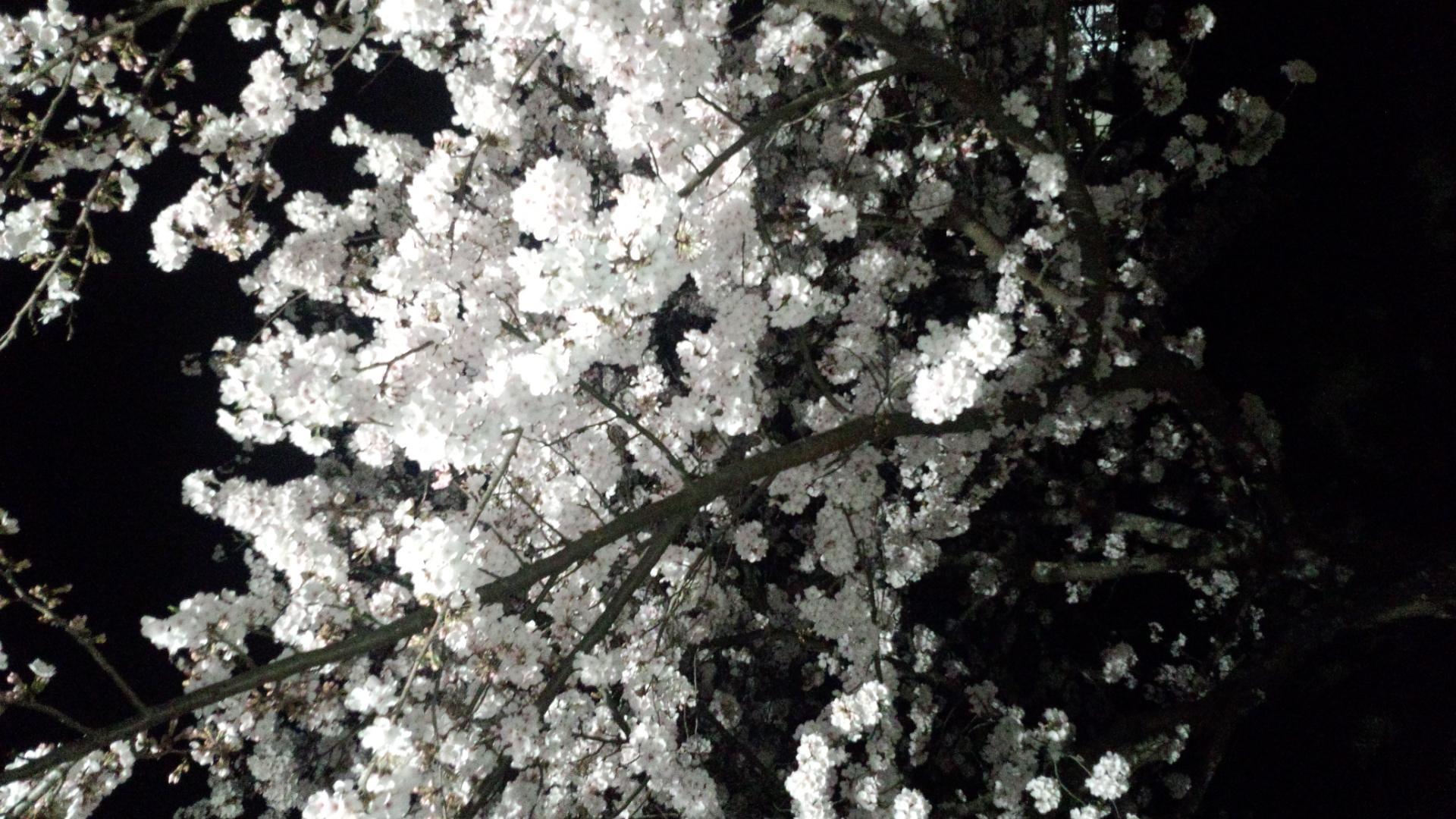 「毎度のスタッフSです!」04/10(04/10) 00:20   【new jewel】大募集!!の写メ・風俗動画