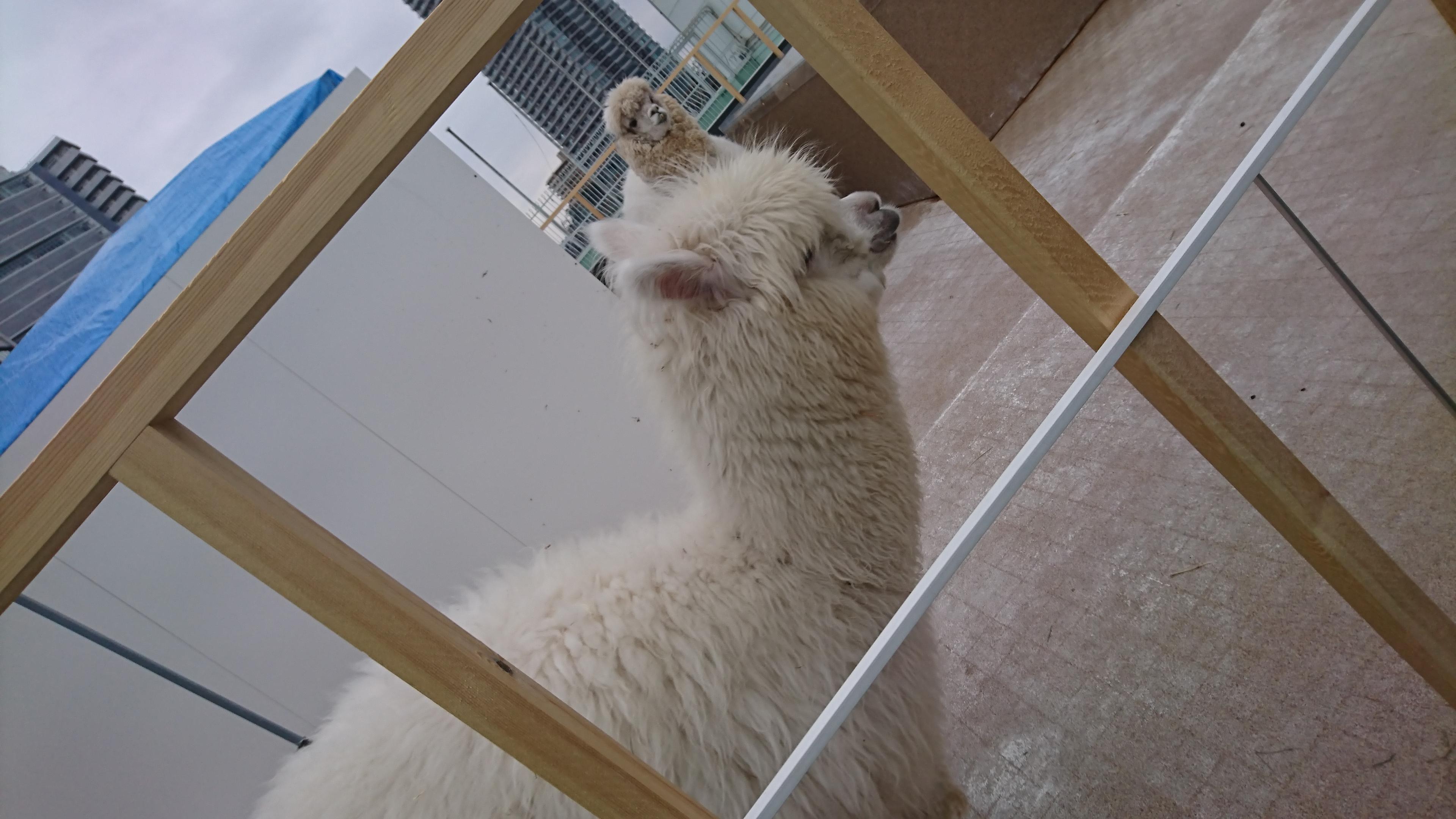 「楽しいこといっぱい」04/12(04/12) 03:53 | まみの写メ・風俗動画