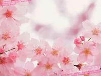 「なぎさ」04/12(04/12) 11:09   なぎさの写メ・風俗動画