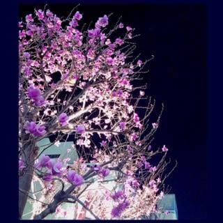 「モクレン」03/24(03/24) 00:25 | ふみのの写メ・風俗動画