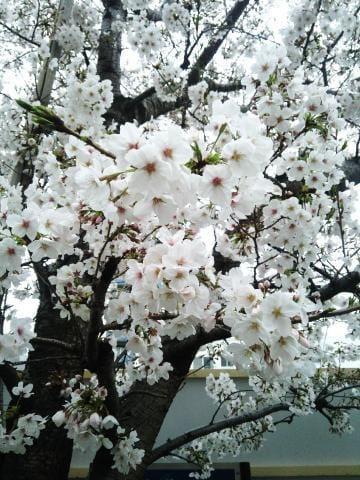 「新年度」04/01(04/01) 18:33 | かんなの写メ・風俗動画