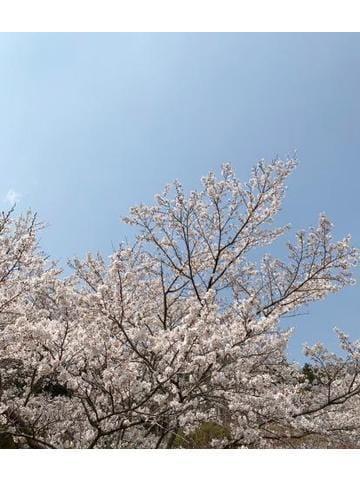 「お花見☆☆」04/16(04/16) 11:00   純奈/じゅんなの写メ・風俗動画
