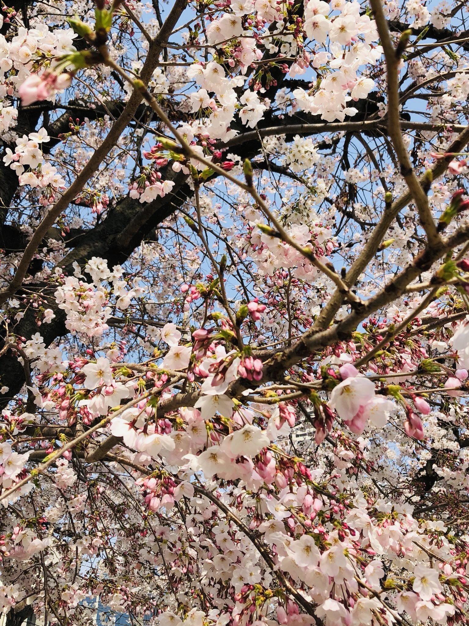 「4月!」04/22(04/22) 13:32 | 恭子の写メ・風俗動画