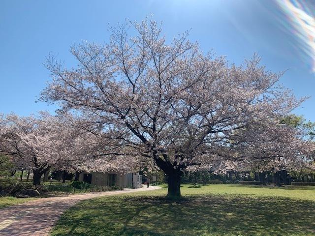 「春、、、」04/25(04/25) 19:52 | みなみの写メ・風俗動画