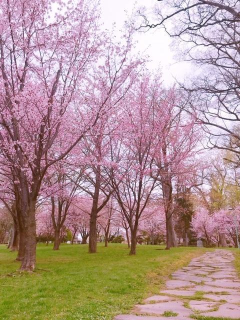 「桜見に行きました!」05/06(05/06) 08:16   りんの写メ・風俗動画
