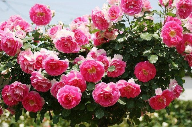 「おはようございます」06/27(06/27) 08:06 | 優花【未経験美人奥様】の写メ・風俗動画