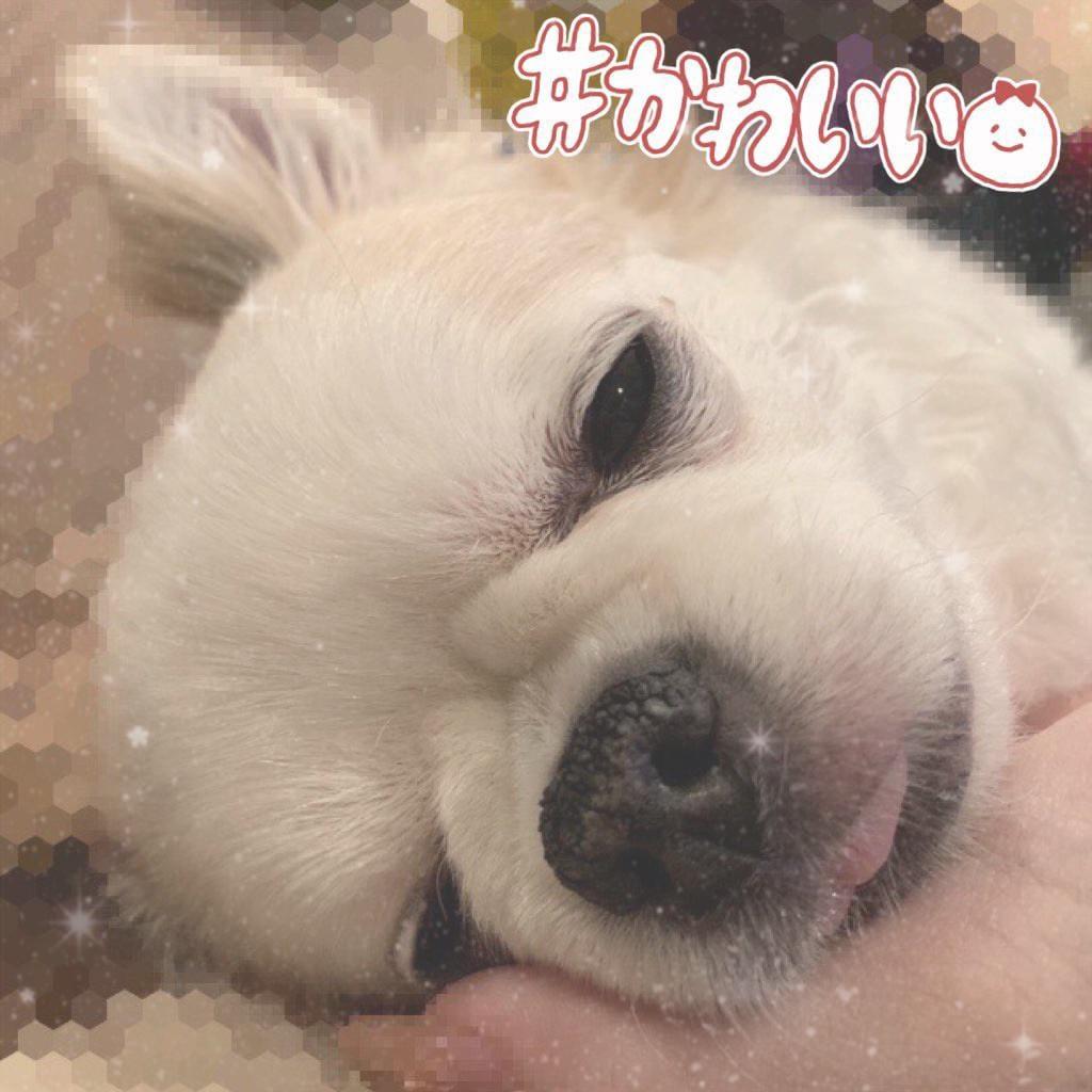 「ひとみ♡」07/21(07/21) 10:00   ひとみの写メ・風俗動画