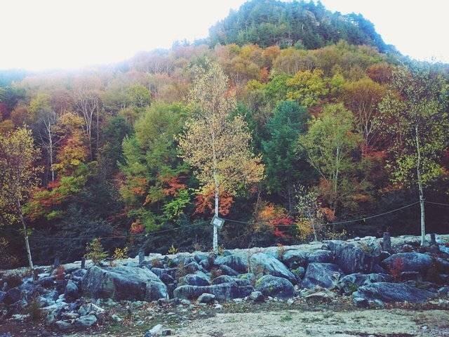 「秋の紅葉が綺麗でした!」11/08(11/08) 00:34 | あこの写メ・風俗動画