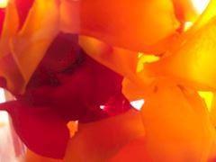 「お休みのお知らせです。」11/29(11/29) 10:23 | まりあの写メ・風俗動画