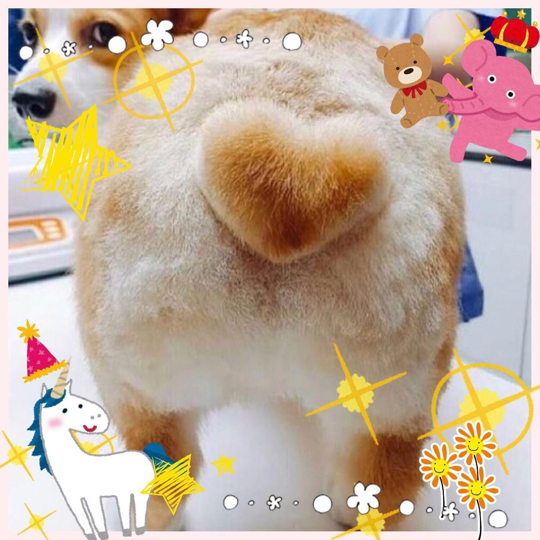 「明日(*☻-☻*)」01/23(01/23) 23:13   ひろの写メ・風俗動画