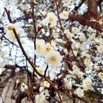 「蕾」02/19(02/19) 01:28 | 桐島 知紗の写メ・風俗動画